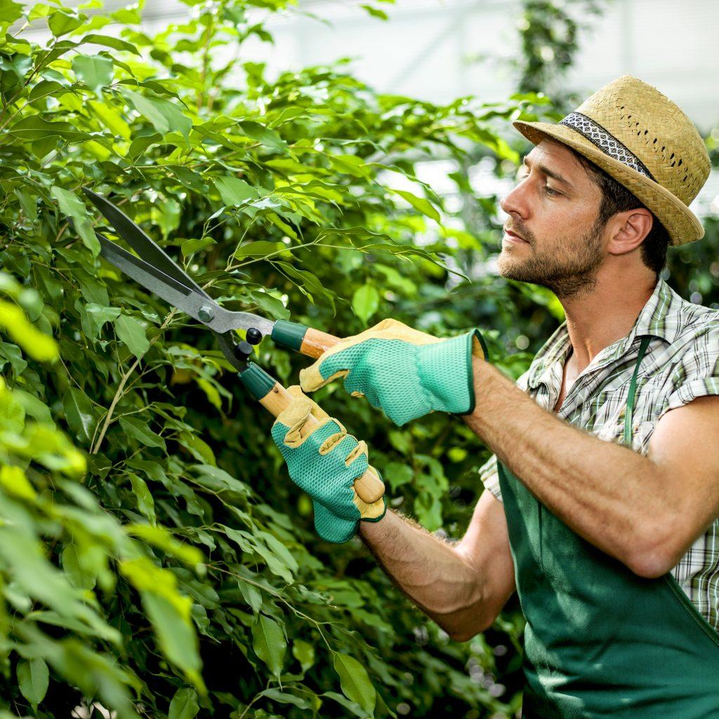 teniski lakat između ostalog može prouzrokovati obrezivanje u vrtu